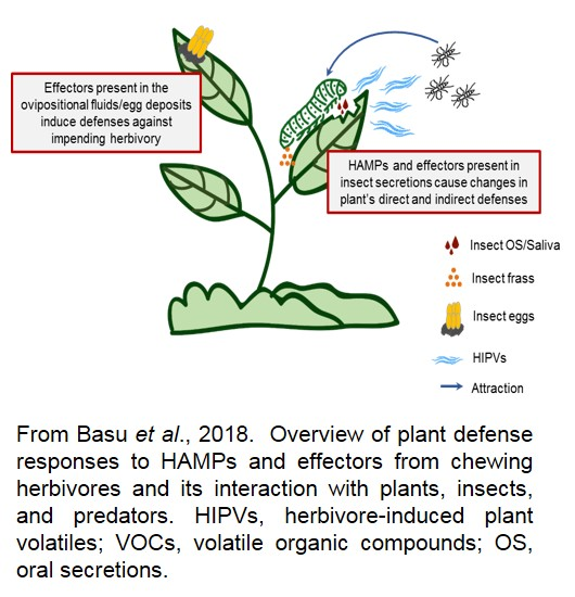 image overview of plant defense responses to HAMPs