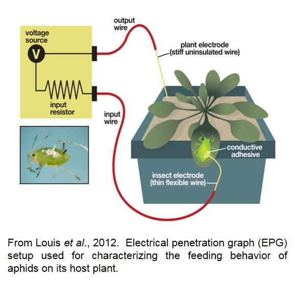 Electrical penetration graph (EPG) setup used for characterizing the feeding behavior of aphids on its host plant.
